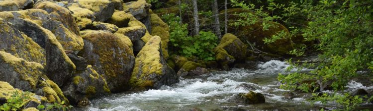 Skagit River with Mossy Boulders