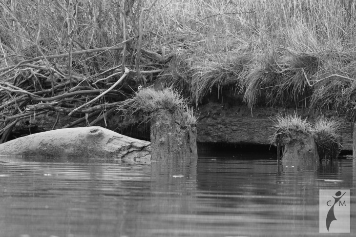 Rotting piling with grass on the Snohomish River in Black and White