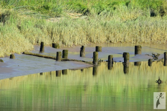 Old pilings on the Snohomish River Short