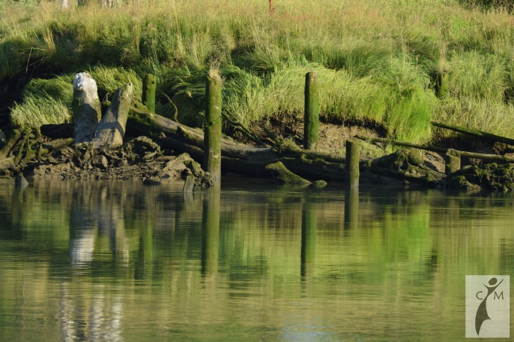Snohomish River with grass and mossy pilings