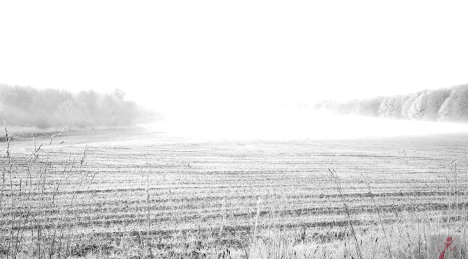 field covered in frost