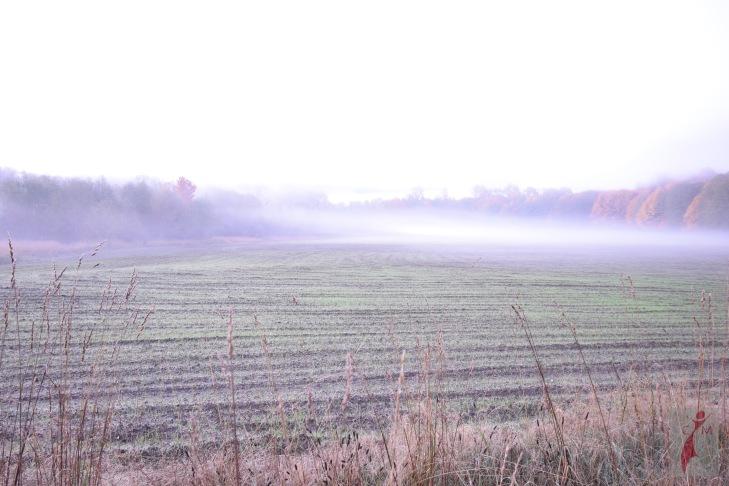 Field recently plowed in Skagit County Washington