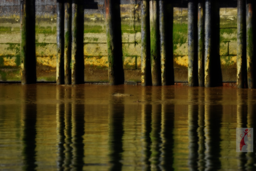 Algae covered pilings
