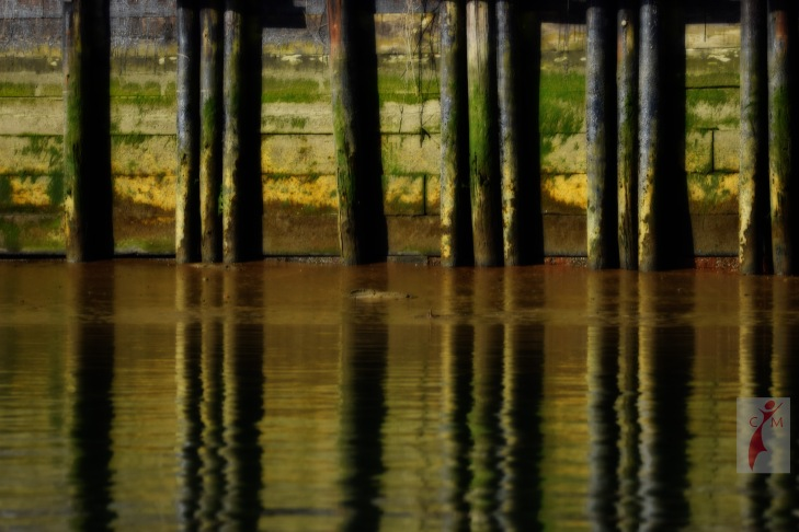 Algae covered pilings