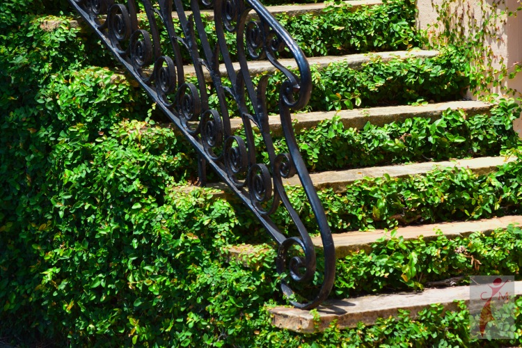 Ivy covered steps of a Charleston home