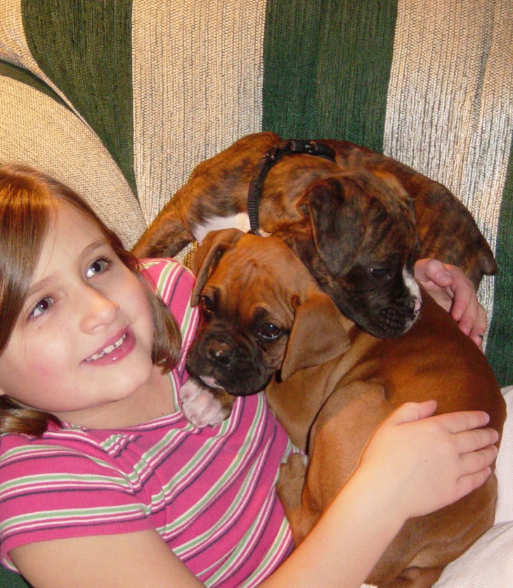 Girl and boxer pups sleeping on a sofa