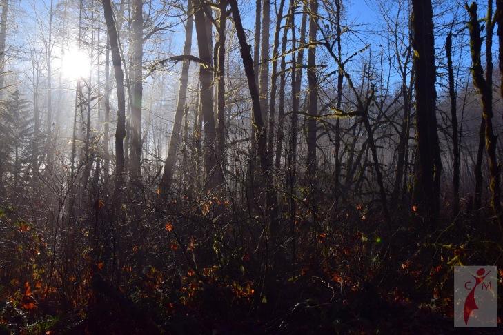 Dawn pacific northwest forest in winter