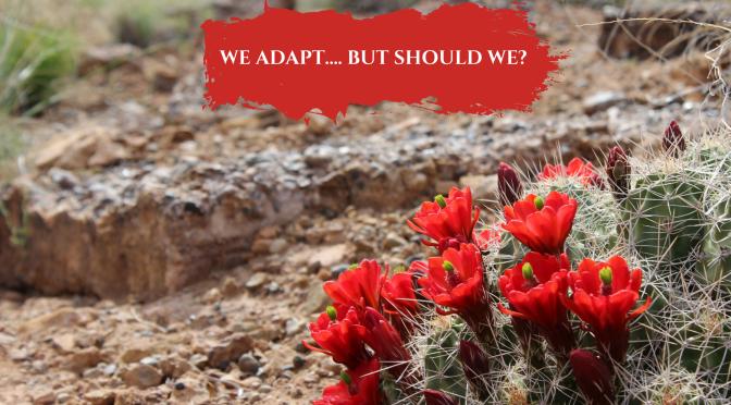 We adapt…. but should we?